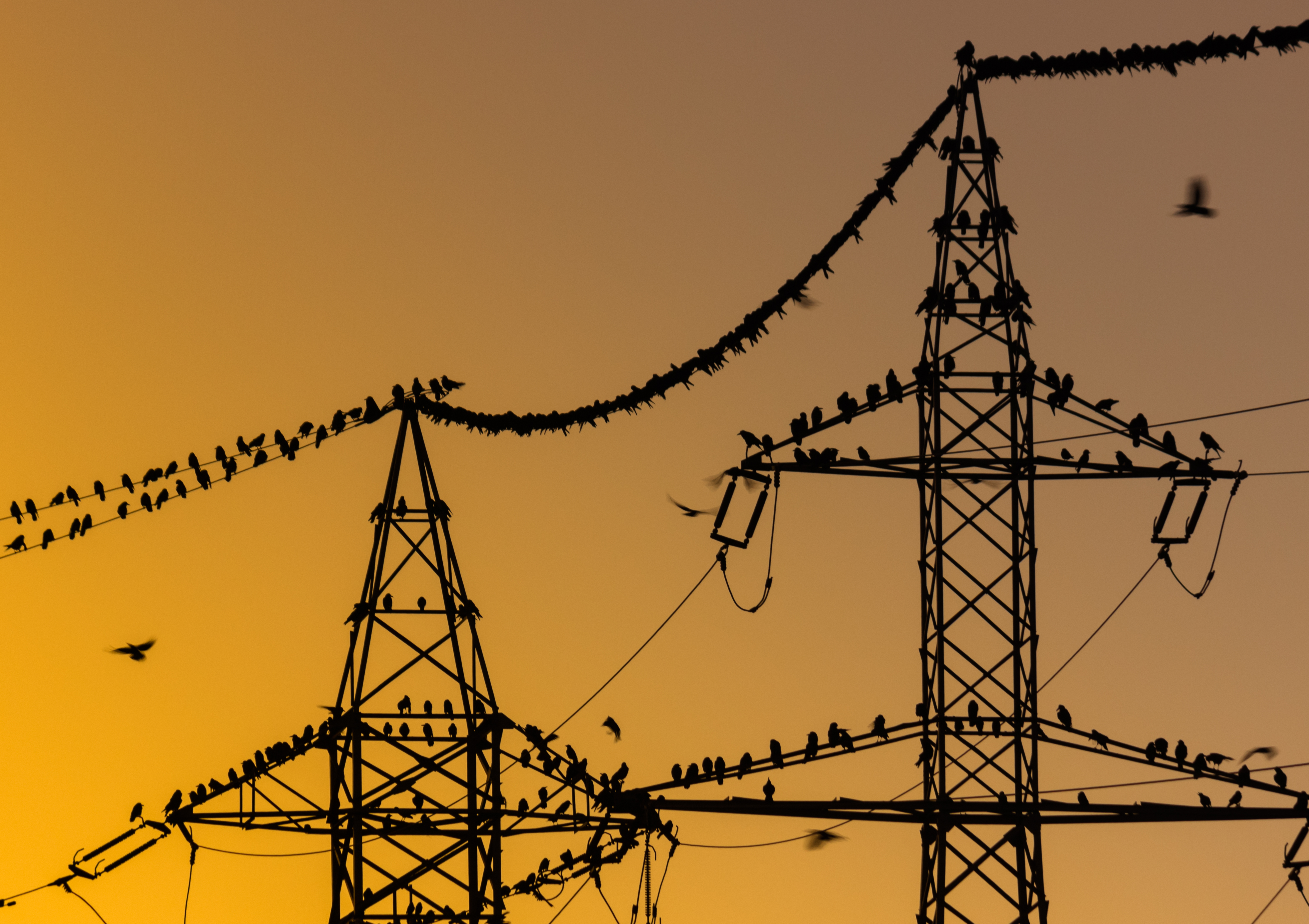 Image of birds on a power tower