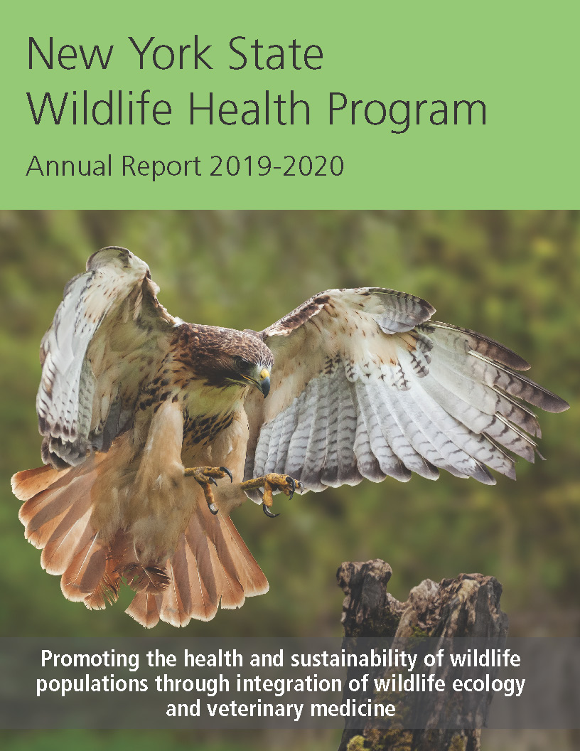 image of cover page of annual report