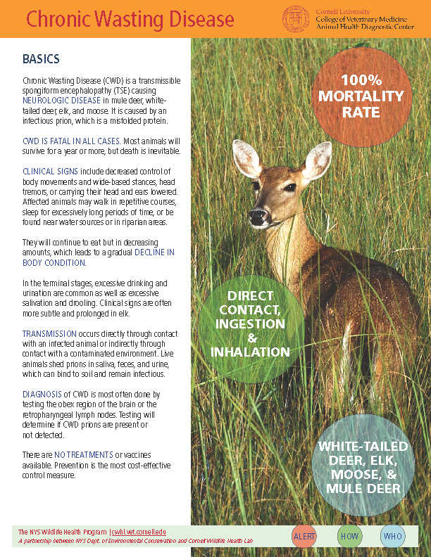 Chronic Wasting Disease (CWD) Disease Fact Sheet Cover Image