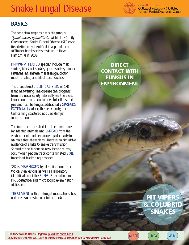 Snake Fungal Disease Fact Sheet Cover Image