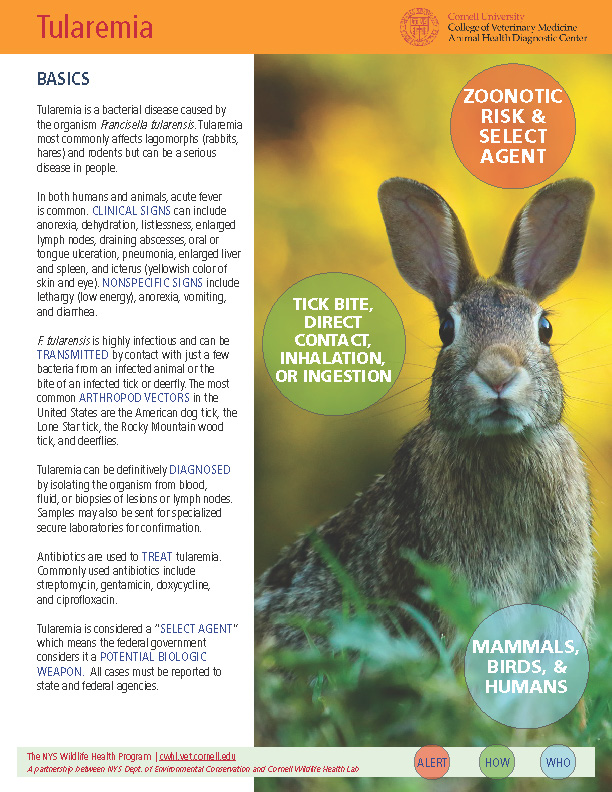 Tularemia Disease Fact Sheet Cover Image