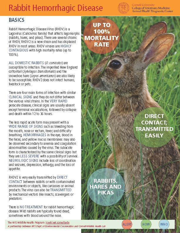 image of RHDV Fact sheet