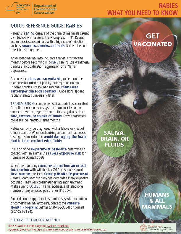 CWHL_NYSDEC Rabies Handout Cover Image