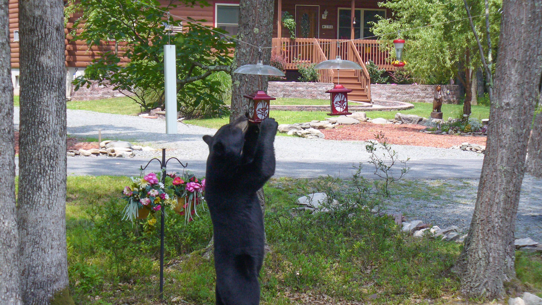 Bear at a bird feeder
