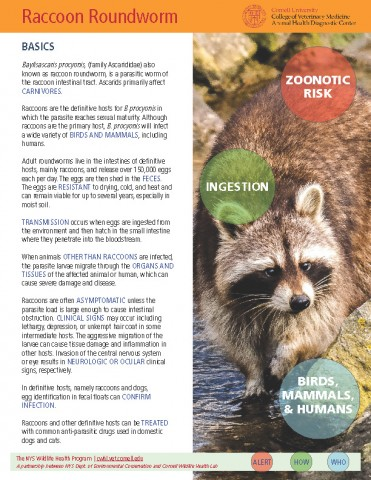 Raccoon Roundworm_Baylisascaris procyonis Disease Fact Sheet Cover Image