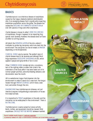 Chytridiomycosis_Bd Disease Fact Sheet Cover Image