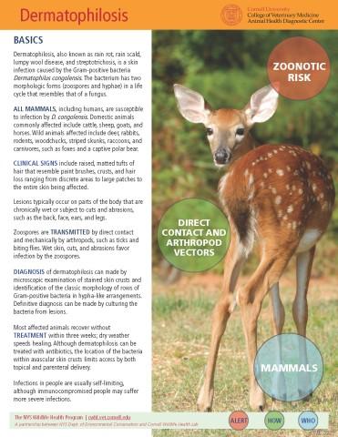 Dermatophilus Disease Fact Sheet Cover Image