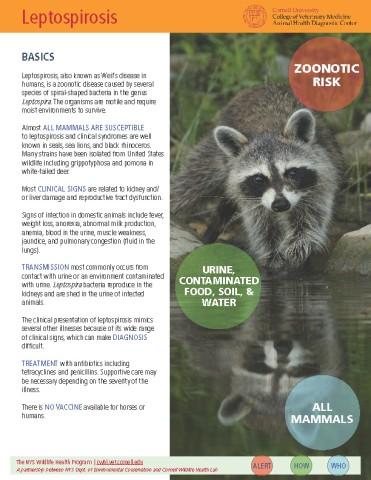 Leptospirosis Disease Fact Sheet Cover Image
