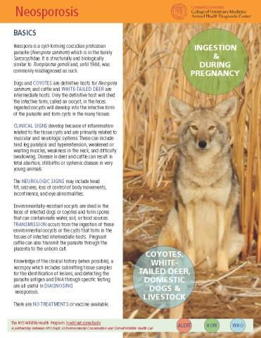 Neosporosis Disease Fact Sheet Cover Image