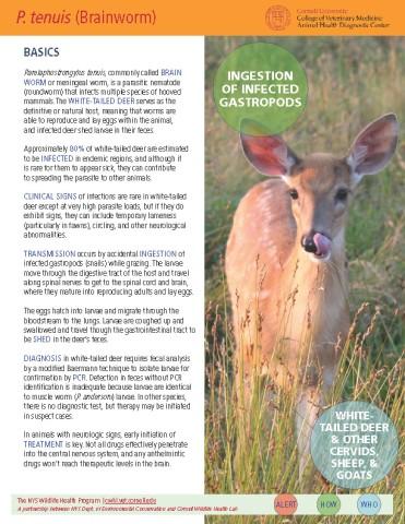 P. tenuis (Brainworm) Disease Fact Sheet Cover Image