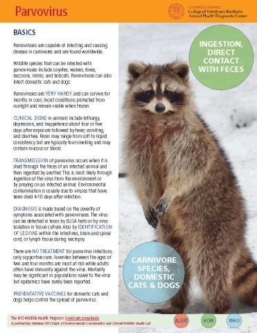 Parvovirus Disease Fact Sheet Cover Image