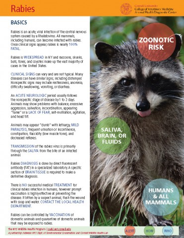Rabies Disease Fact Sheet Cover Image
