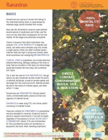 Ranavirus Disease Fact Sheet Cover Image