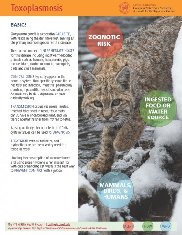 Toxoplasmosis Disease Fact Sheet Cover Image