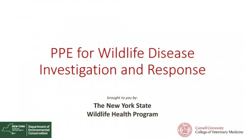 NYS WHP PPE for Wildlife Disease investigation and Response 2017