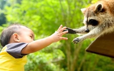 boy and raccoon