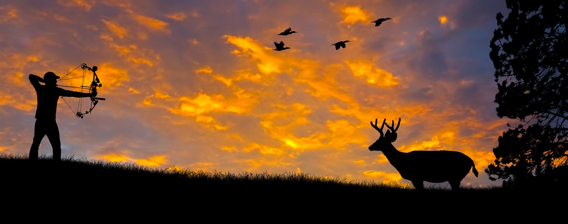 deer in bow hunter sights at sunset