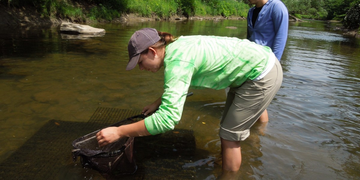 Wildlife Project manager, Niki Dean, checking cages for Eastern Hellbender release