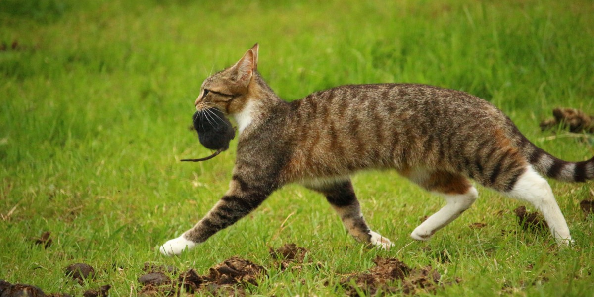 domestic cat with prey