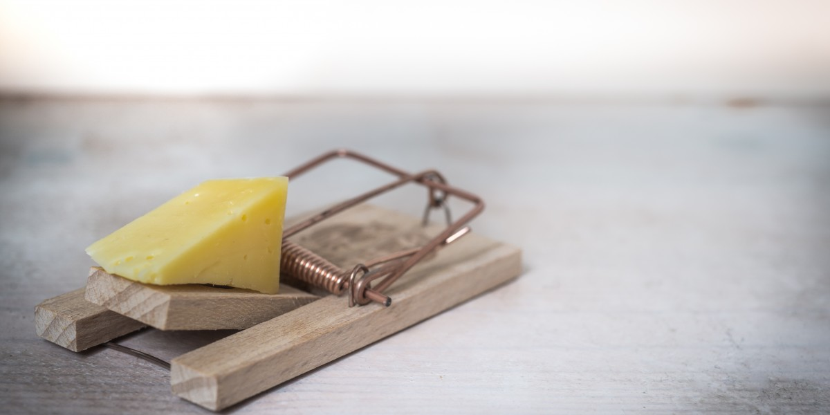 standard mouse trap with cheese