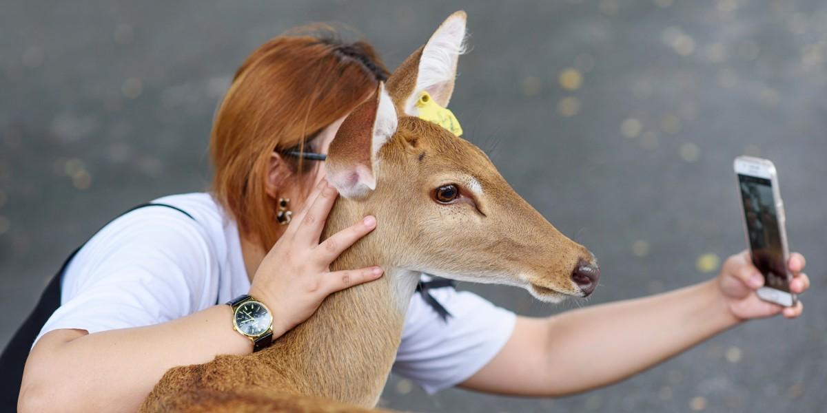 Deer tourist selfie