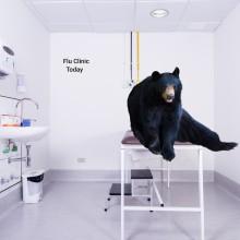 black bear in a doctor's office