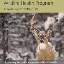 CWHL Annual report cover